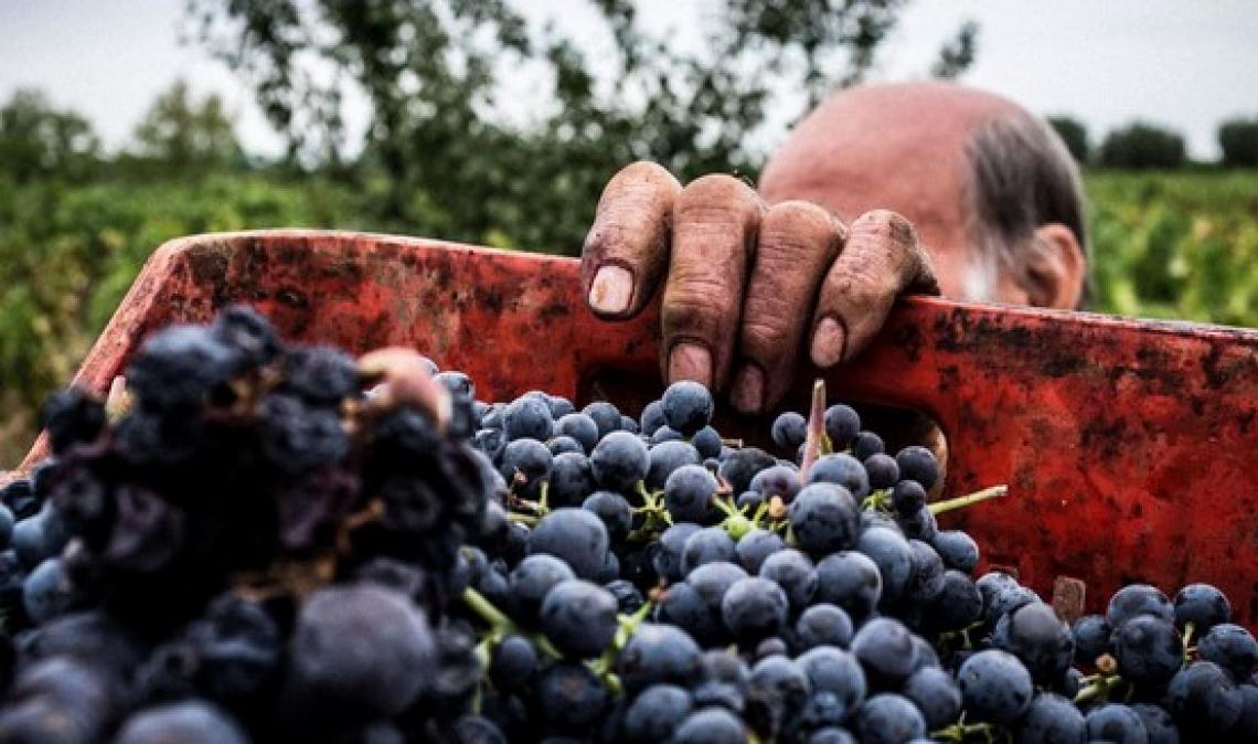 Il vino riparte dai distretti territoriali e regionali: il Crea ci scommette