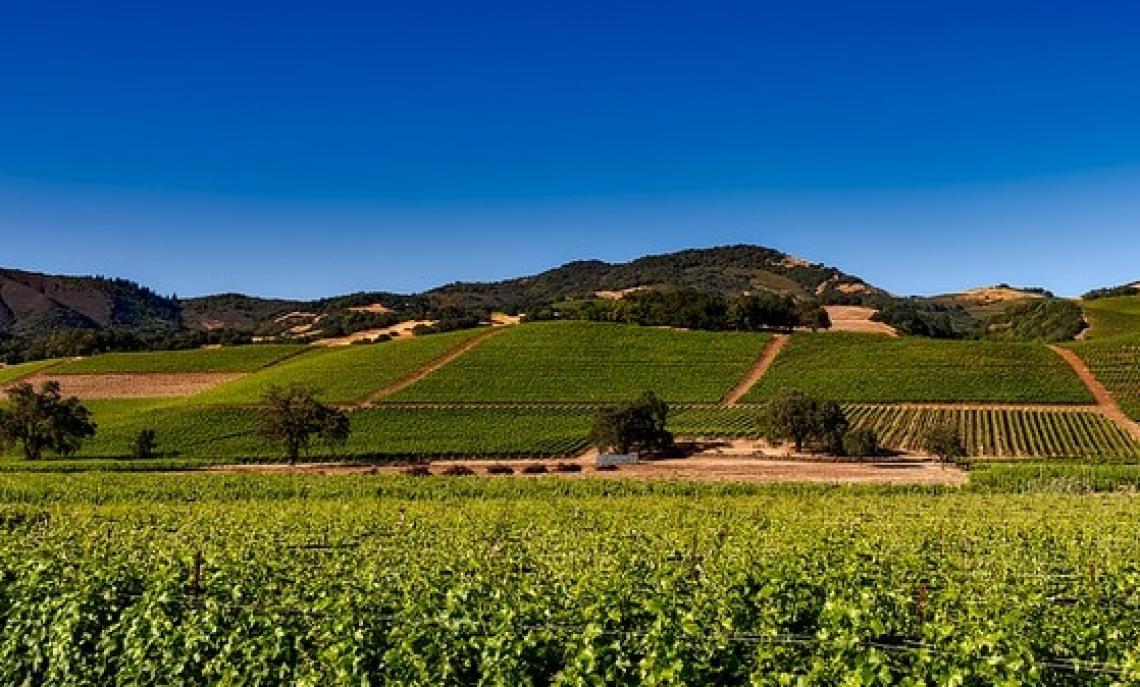 Montalcino e Napa: un gemellaggio nel segno di grandi vini
