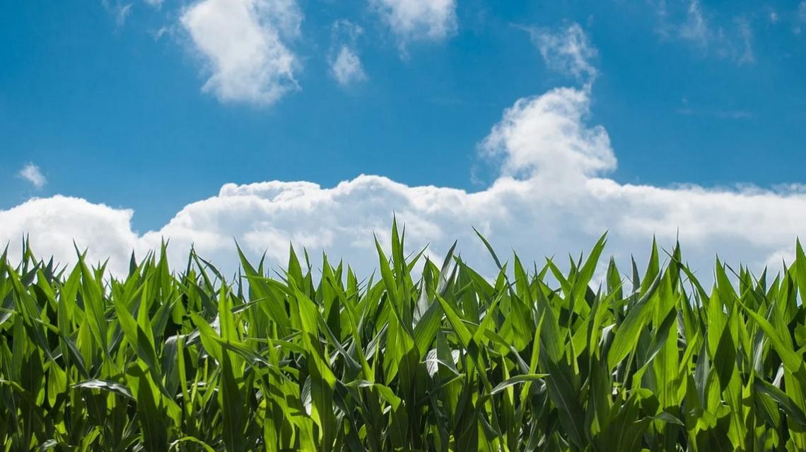 La riforma della Pac agita gli agricoltori di Francia e Spagna che scendono in piazza