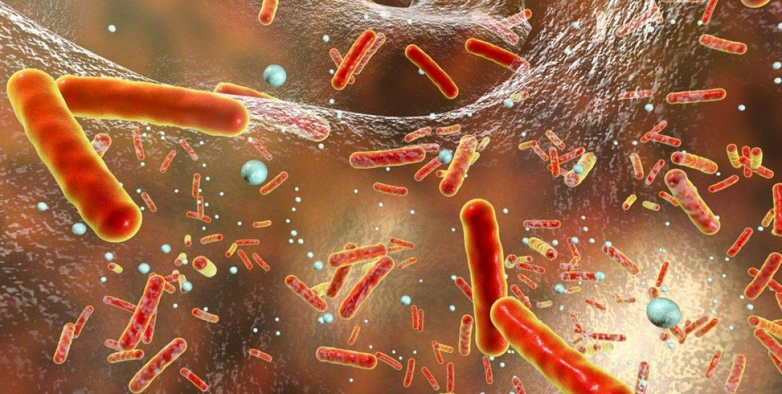 Ancora alti i livelli di resistenza nei batteri che provocano infezioni alimentari