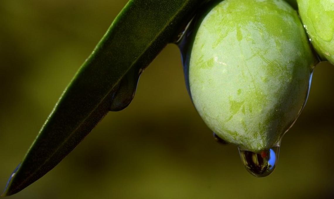 I migliori prodotti per alleviare lo stress idrico dell'olivo