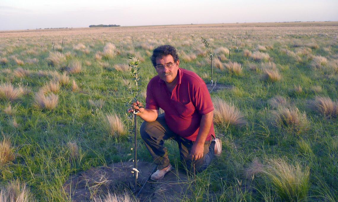 Alla scoperta dell'olivicoltura più a sud del mondo: la Patagonia argentina