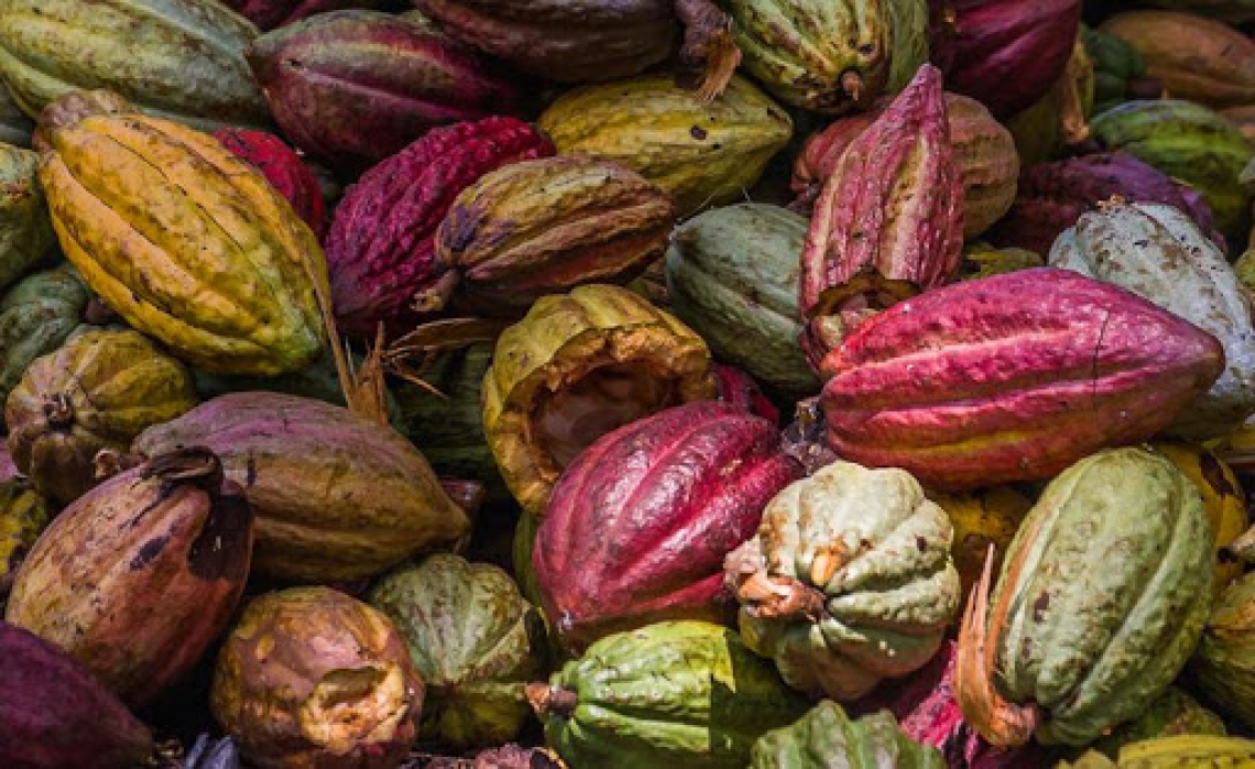 Per l'estate 2021 arriva il sorbetto al frutto di cacao