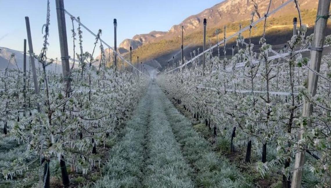In Trentino ciliegio e melo sono le colture più colpite
