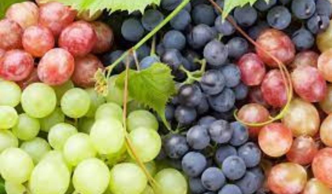Cresce in quantità e valore l'export di uva da tavola italiana