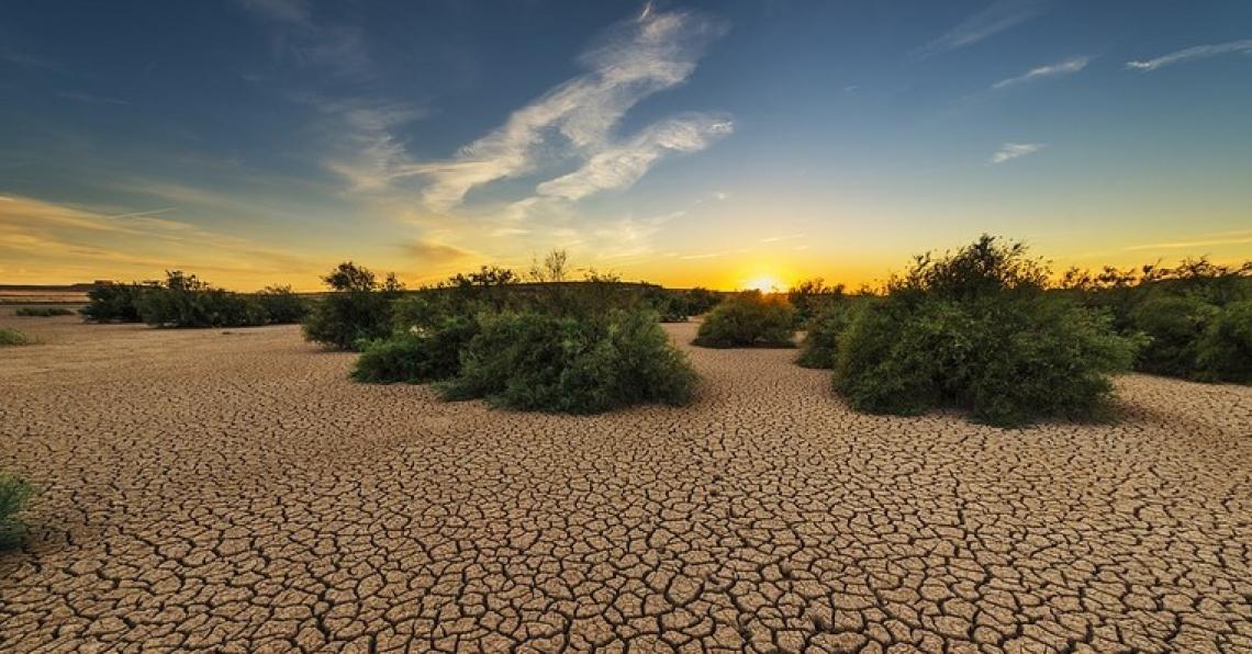 I microrganismi sono utili,  al servizio di agricoltura e ambiente