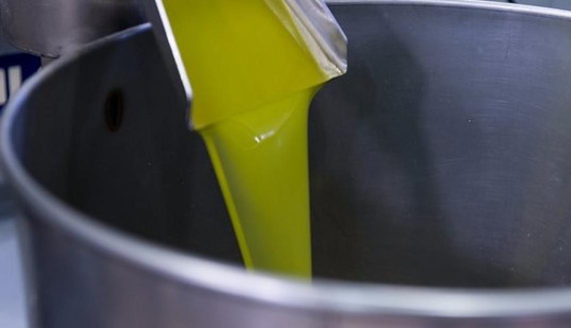 Differenze qualitative e quantitative nella composizione fenolica tra le drupe, la pasta, la sansa, le acque reflue e l'extra vergine