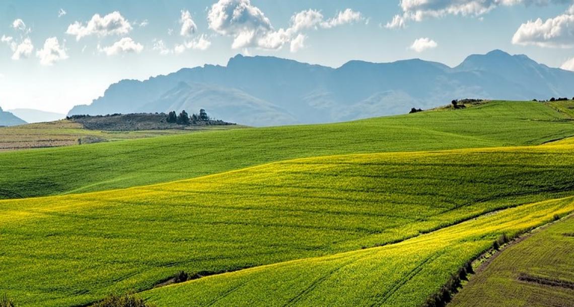 I piccoli contadini sfamano il mondo