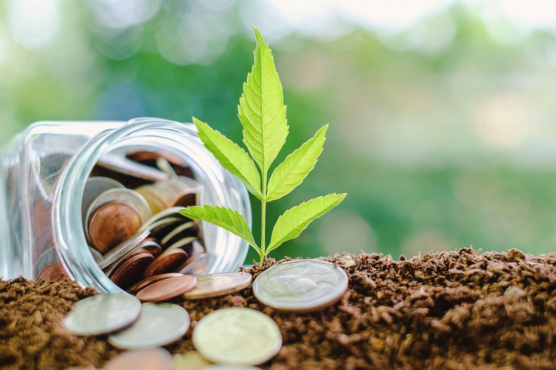 Contributi a fondo perduto e mutui a tasso zero per i giovani agricoltori