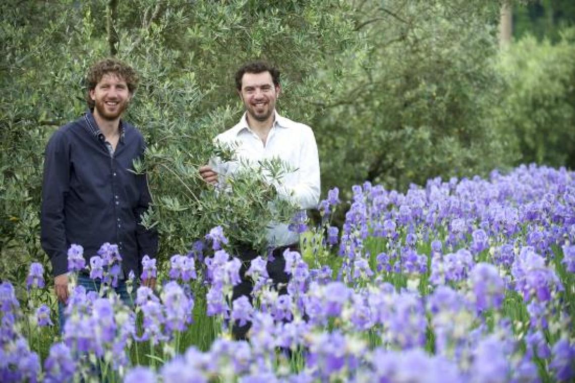 Due giornate in Chianti alla scoperta della fioritura dell'iris
