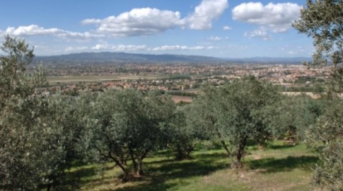 Passeggiate e buon gusto: l'olivo e l'olio in Umbria