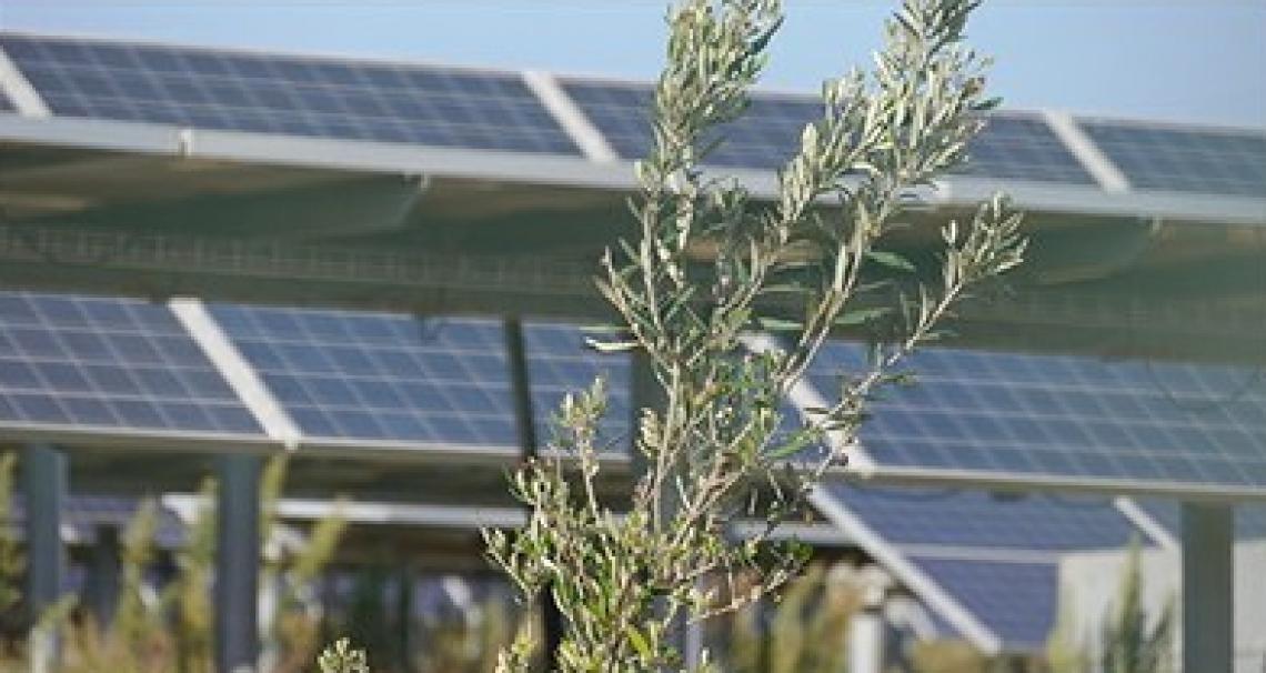 Enea lancia la prima rete nazionale per l'agrivoltaico sostenibile