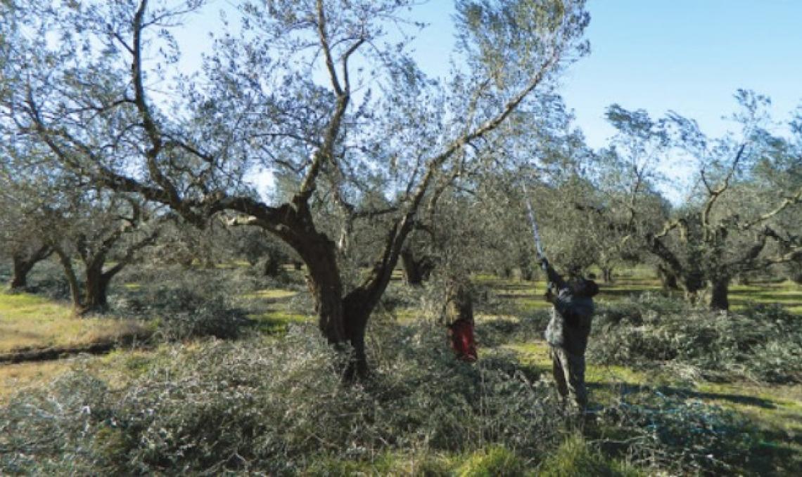 Creare una ceramica a partire dalla cenere di potature d'olivo