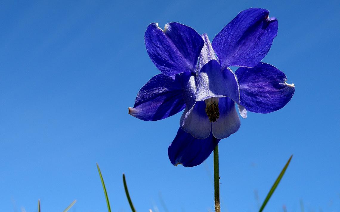 Anche i ricercatori possono rimanere affascinati da piante e fiori