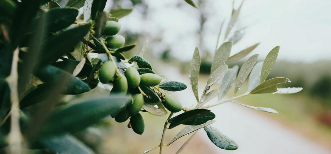 Uno strumento automatizzato e non distruttivo per il monitoraggio della maturazione delle olive