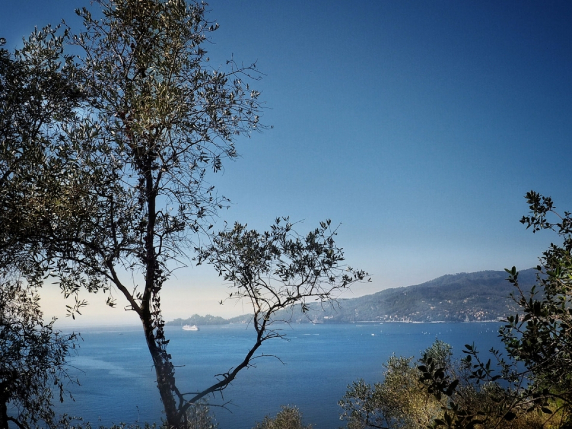 Nocciole Misto Chiavari e Olio Dop Riviera Ligure: strane alleanze del gusto