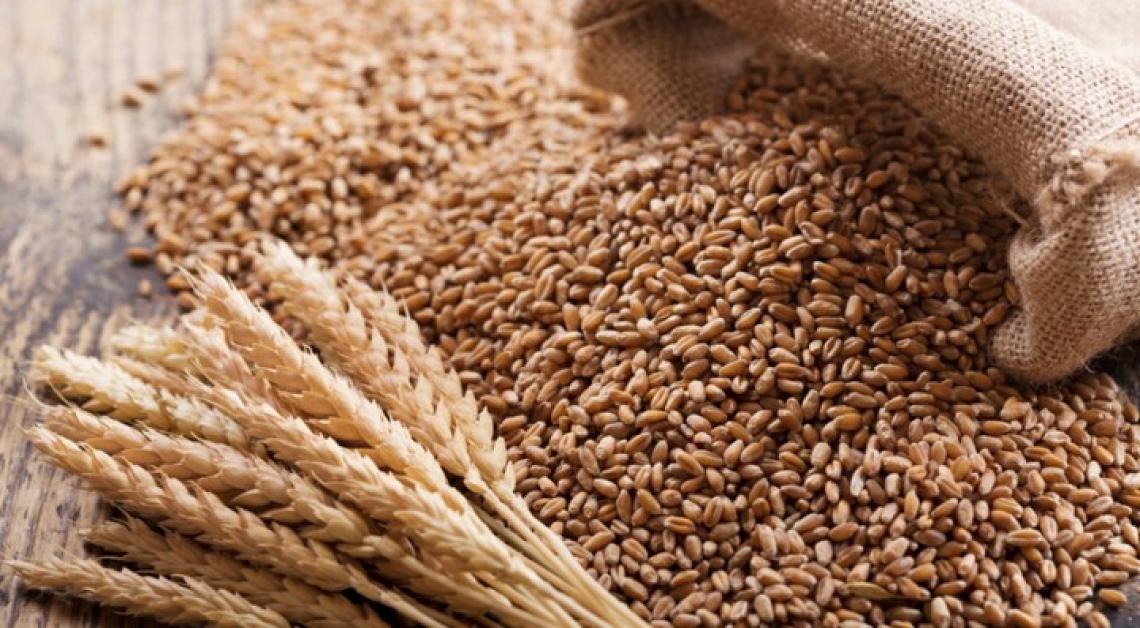 Grazie al miglioramento genetico l'aumento delle rese che sfama il mondo