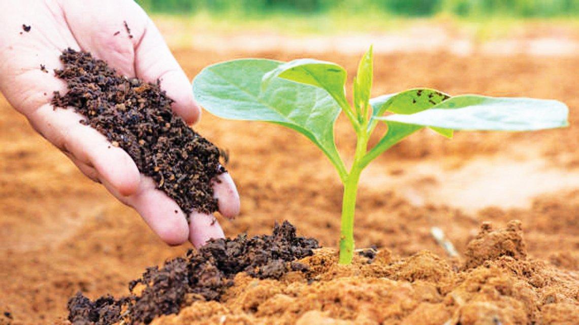 Approvata in Senato la legge sull'agricoltura biologica