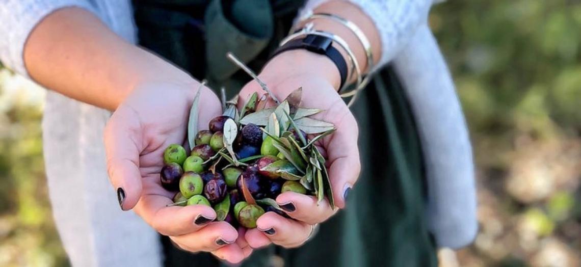 Migliorare la reputazione del mondo dell'olio d'oliva italiano