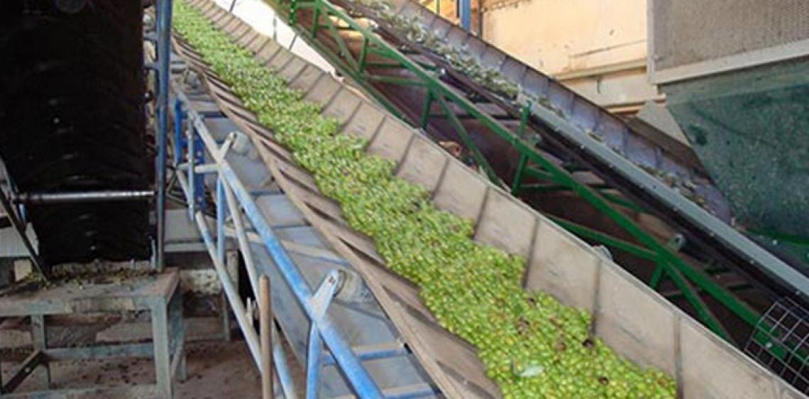 Previsto il record per la produzione d'olio d'oliva nel 2021/22