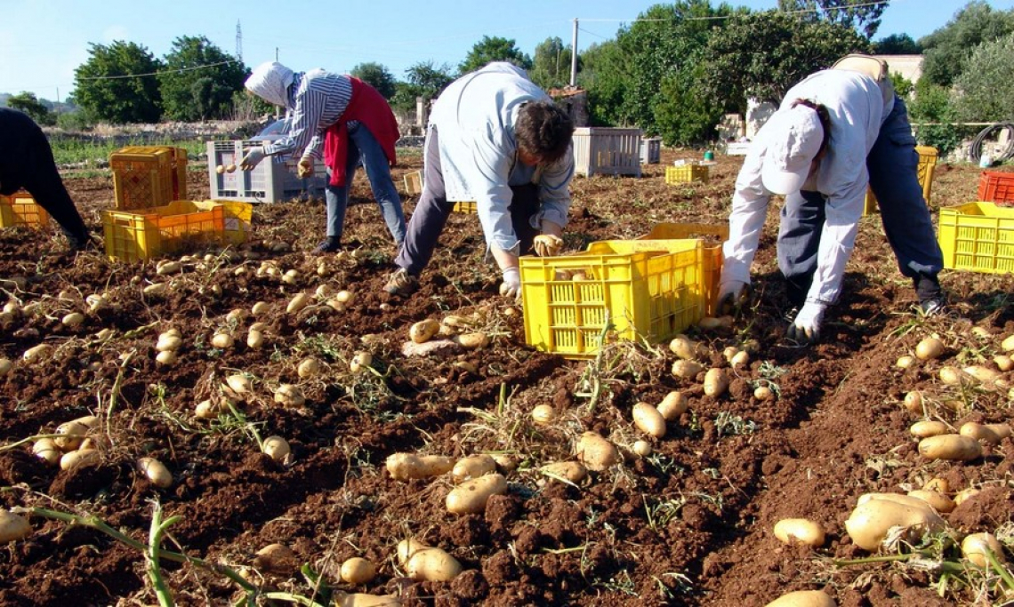 Il Covid deprime le attività secondarie dell'agricoltura