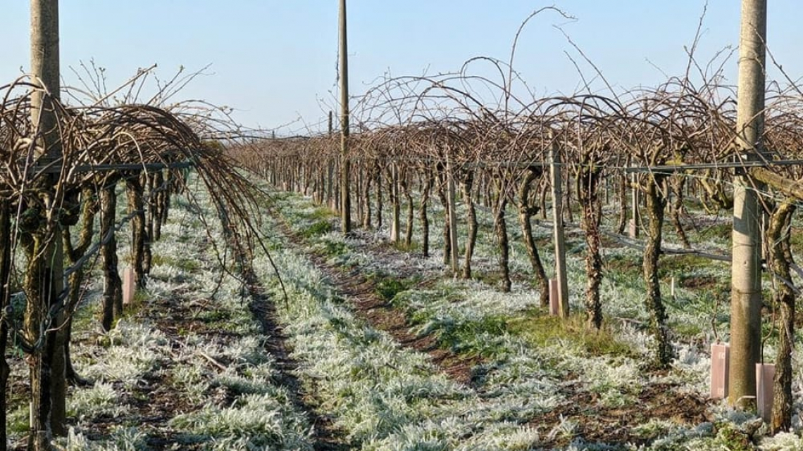Gelate primaverili: risarcimenti statali insufficienti per l'agricoltura