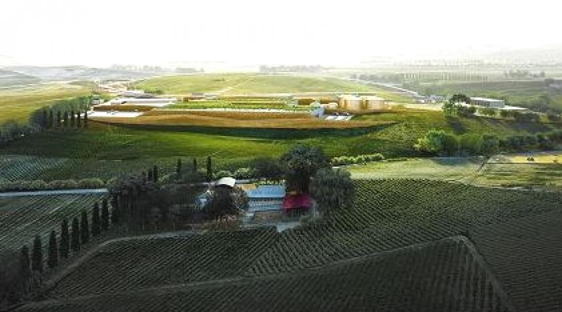 200 mila olivi per abbattere la CO2 e cambiare il paesaggio