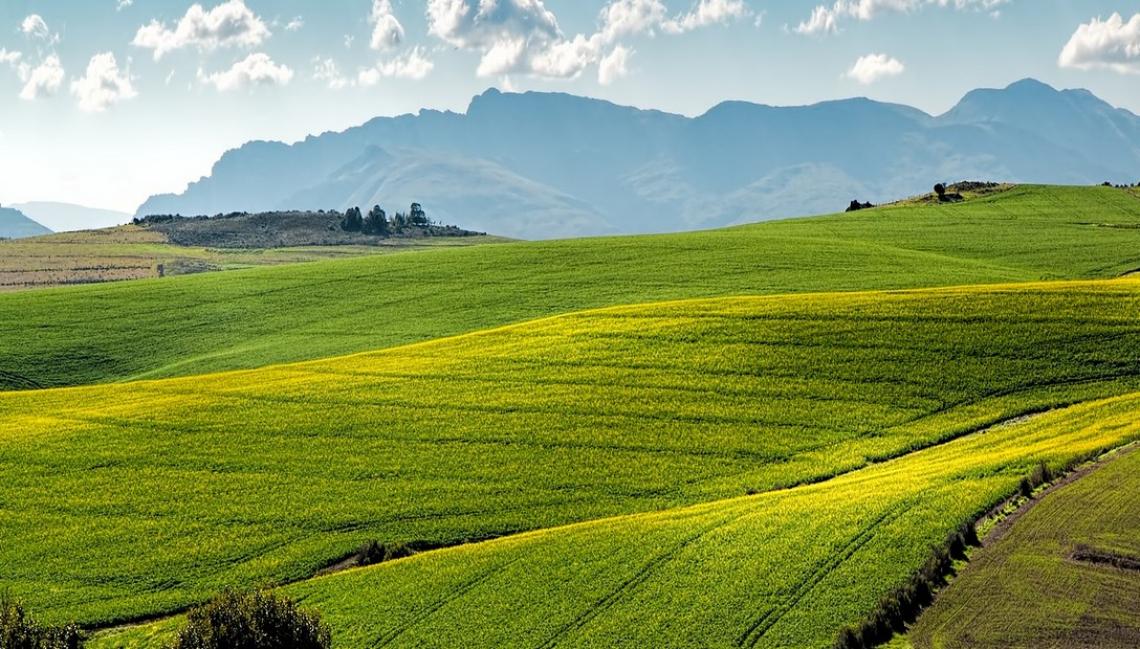 In vendita oltre 16mila ettari di terreni agricoli della Banca nazionale delle Terre Agricole di Ismea
