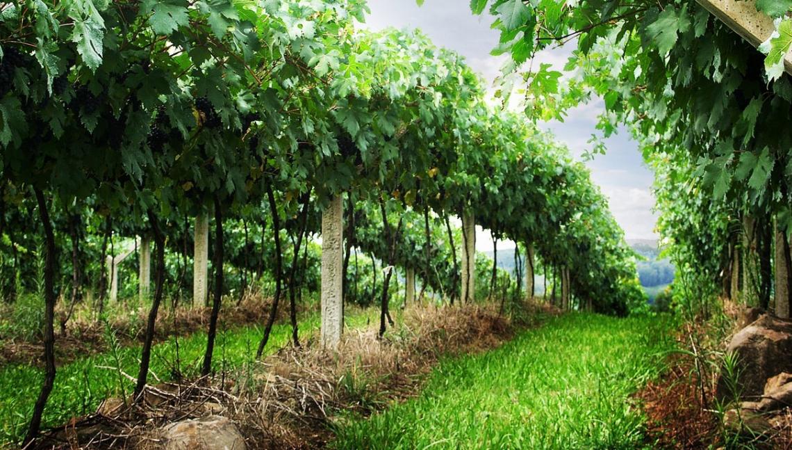 Le nuove Città del Vino della Sardegna: patrimoni da scoprire