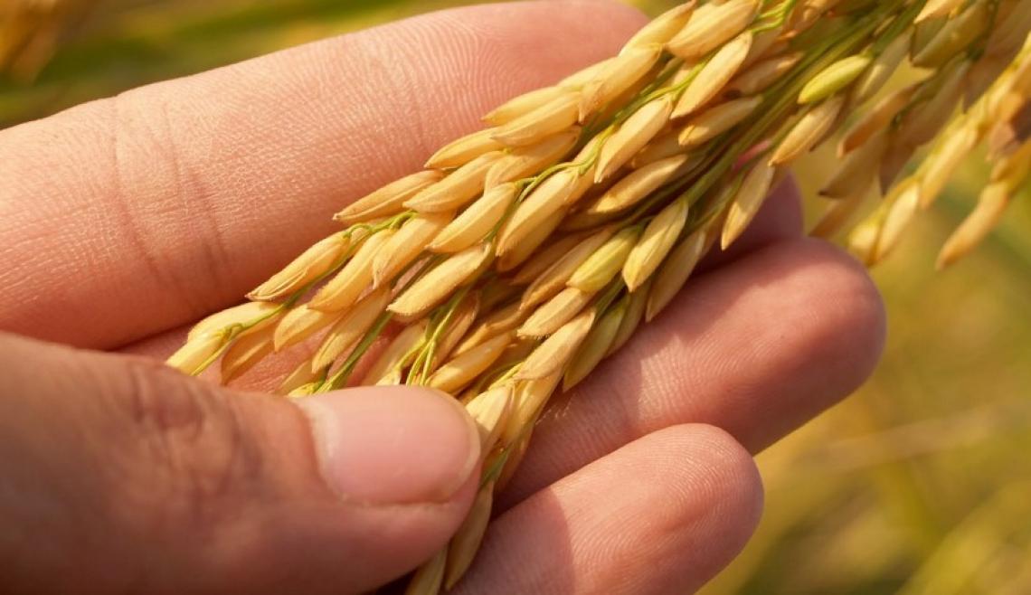 Impennata record per i prezzi delle derrate alimentari mondiali a maggio