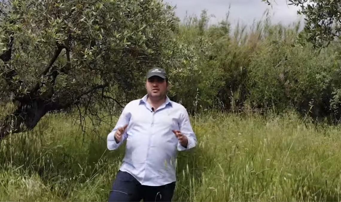 Ager Oliva: se sono i giovani a recuperare olivi abbandonati