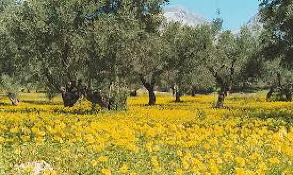 Sulla questione del riconoscimento dell'Interprofessione dell'olio d'oliva ora interverrà Patuanelli