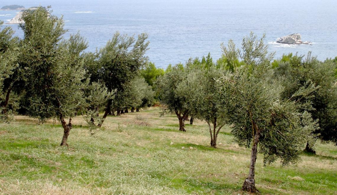 Le aziende olivicolo-olearie dovrebbero smettere di sacrificare il valore in nome del costo