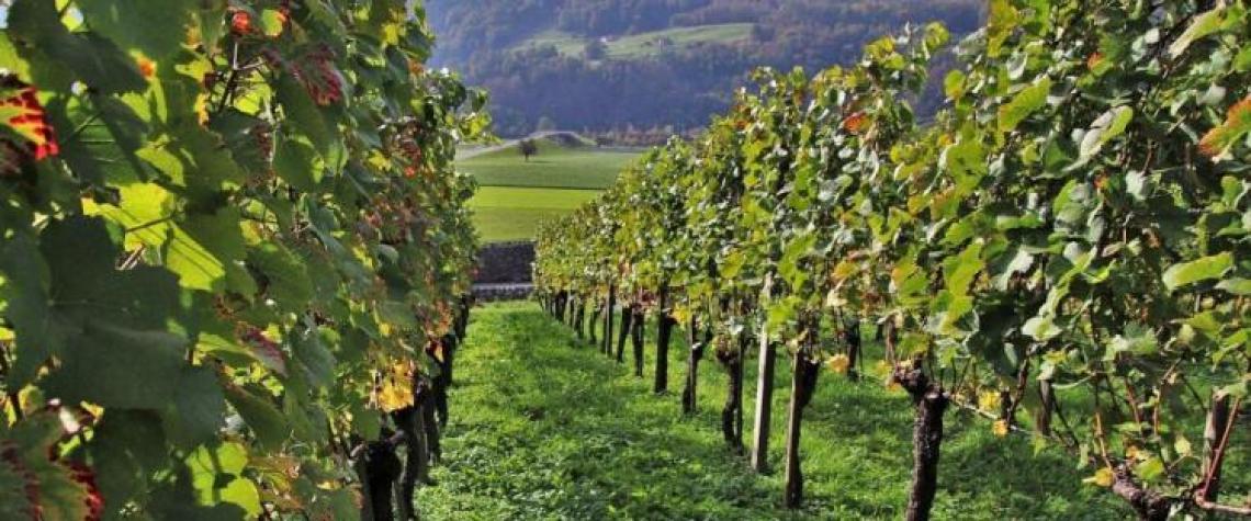 I viticoltori veneti puntano sulla denominazione Valpolicella doc Superiore