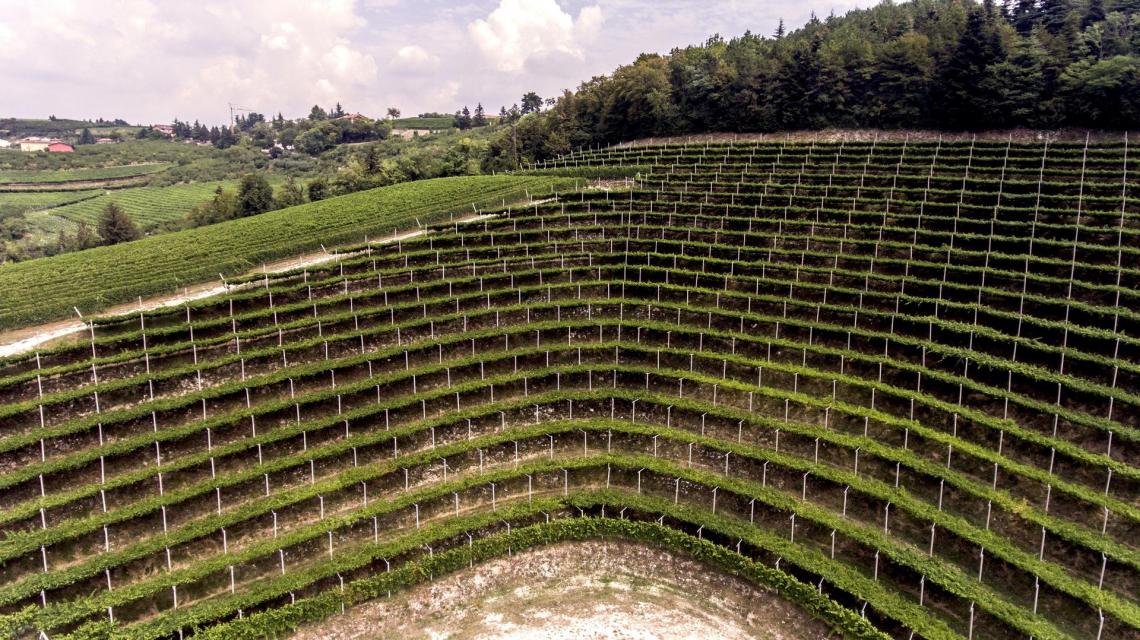 I caratteri aromatici dei vini con uve Corvina e Corvinone