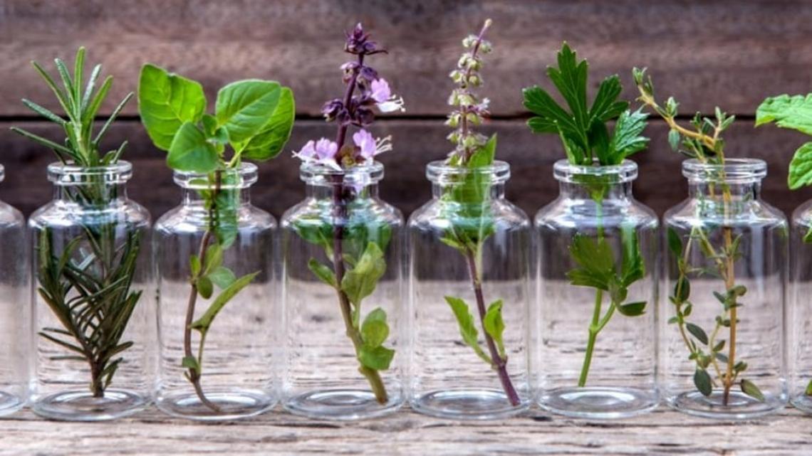 La coltivazione di piante officinali con la logica dell'economia circolare