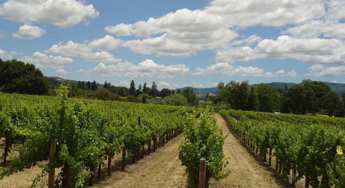 I viticoltori del Roero lanciano la campagna per bandire il diserbo