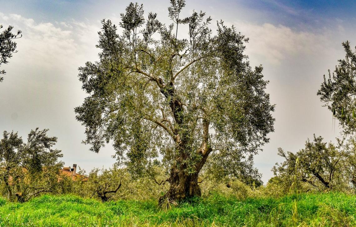 Pantano Vitamaria vince la borsa di studio Giorgio Fazari per la miglior tesi olivicolo-olearia