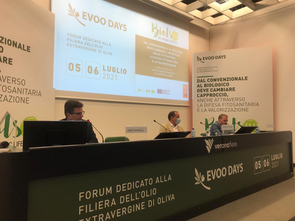 La Pac conferma i 34 milioni per le associazioni olivicole italiane