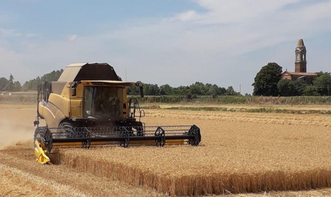 Il bilancio della raccolta del grano: volano i prezzi