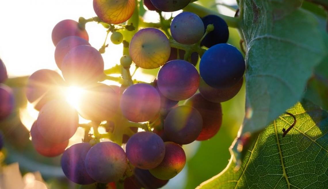 Per il vino italiano previsto un rimbalzo del 9% entro il 2021 ma persi 3 miliardi