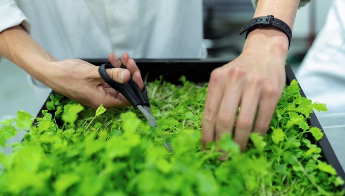 Pac, Green Deal e sostenibilità: professionisti fondamentali in agricoltura