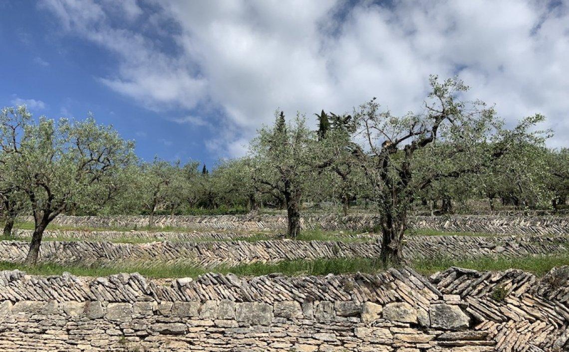 Le colline terrazzate della Valpolicella nel registro nazionale dei paesaggi rurali storici