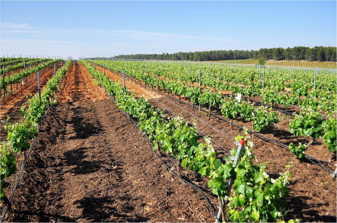 Diminuire l'apporto di azoto alle viti grazie a nuovi nanofertilizzanti