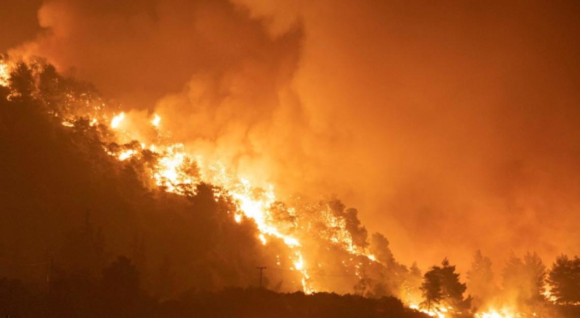Distrutto dalle fiamme in Grecia un olivo di 2500 anni fa
