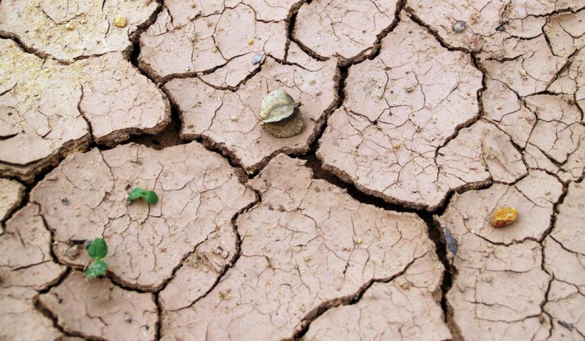 Danni per un miliardo di euro per la siccità e ondate di calore