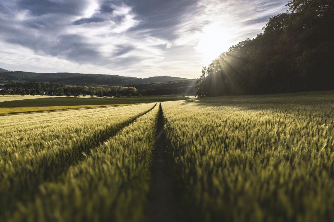 Una settimana di eventi per il G20 dell'Agricoltura a Firenze