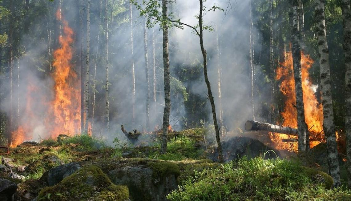 Nuove misure urgenti contro gli incendi boschivi