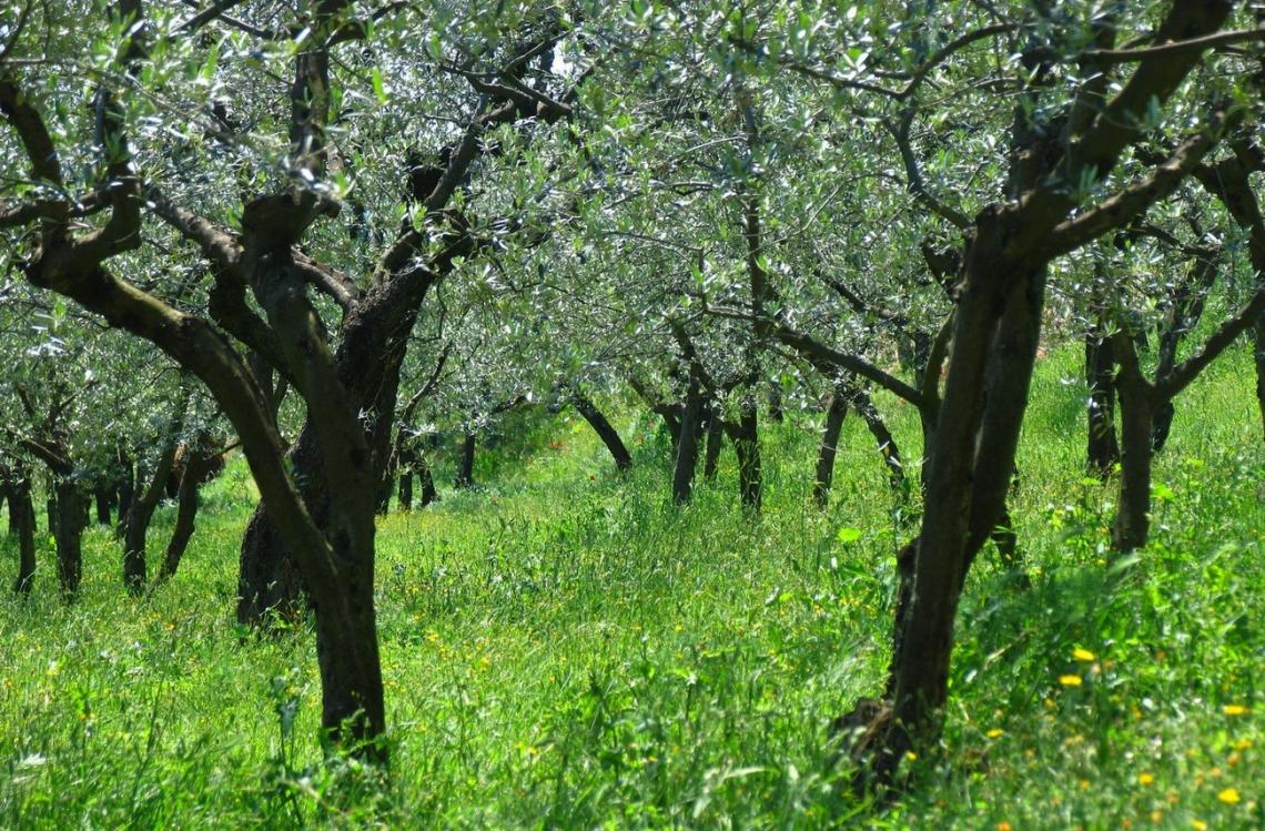 L'inerbimento, anche temporaneo, migliora struttura e composizione della comunità batterica del suolo