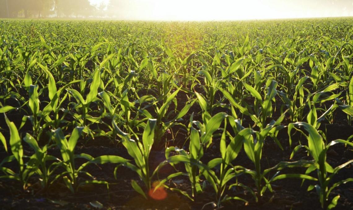 Ridurre l'utilizzo di erbicidi senza lavorare il suolo